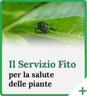 Il Servizio Fito per la salute delle piante
